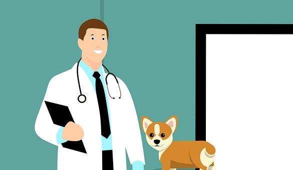 assurance pour animal de compagnie